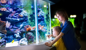 Grapevine Attractions- Sea Life Aquarium. Things to do in Grapevine